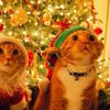 Уважаемые жители!  В связи с предстоящими новогодними  праздниками и с целью своевременного обеспечения квитанциями, просим Вас предоставить показания индивидуальных приборов учёта в срок до 15 декабря 2018 г. включительно.