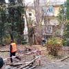 Высотные работы по удалению сухого дерева