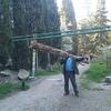 Вывоз остатков сухого дерева