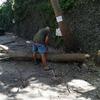 Спил деревьев ул. Фрунзенское шоссе 6,6а